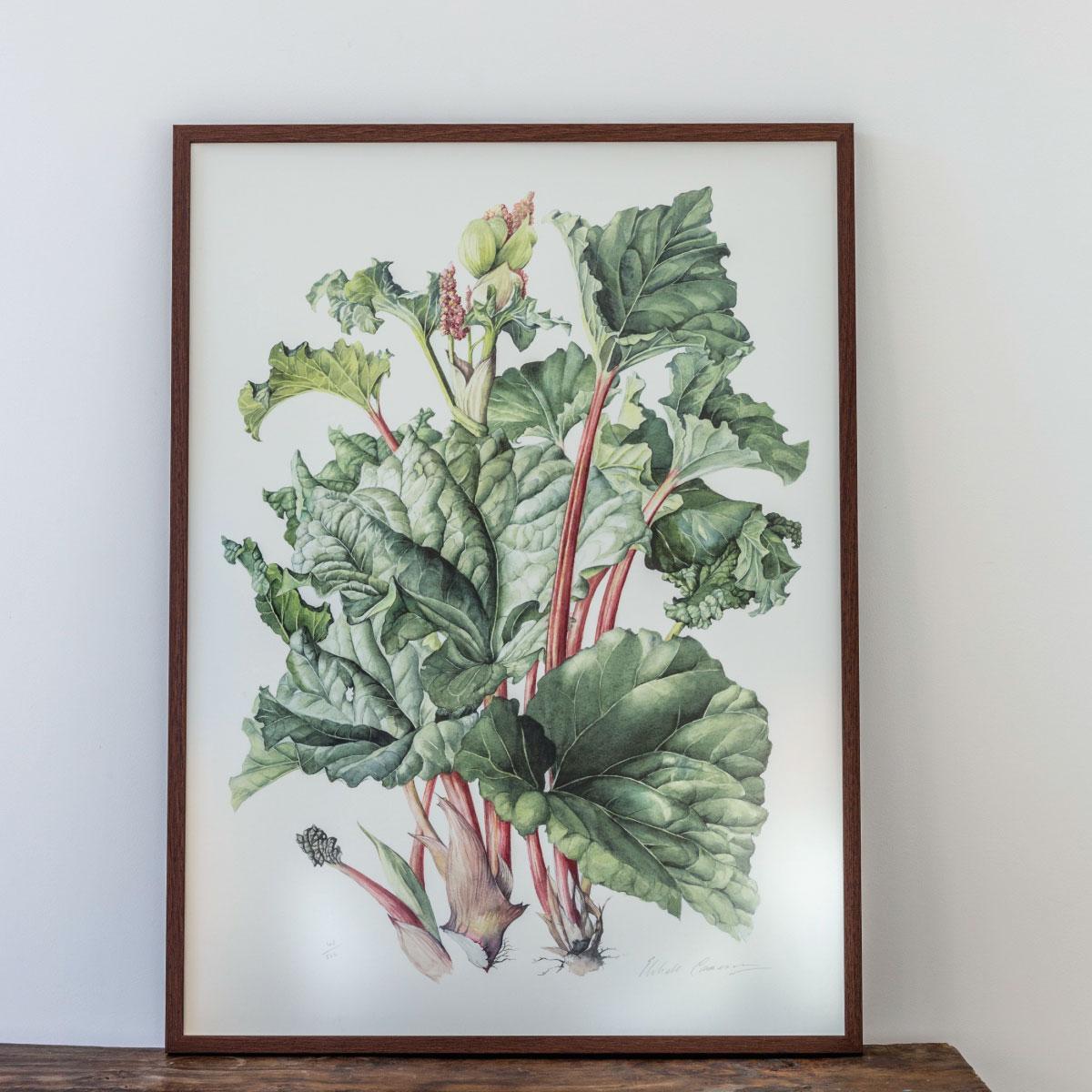 Elizabeth-Cameron-Rhubarb