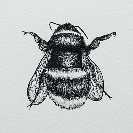 Bee | Detail