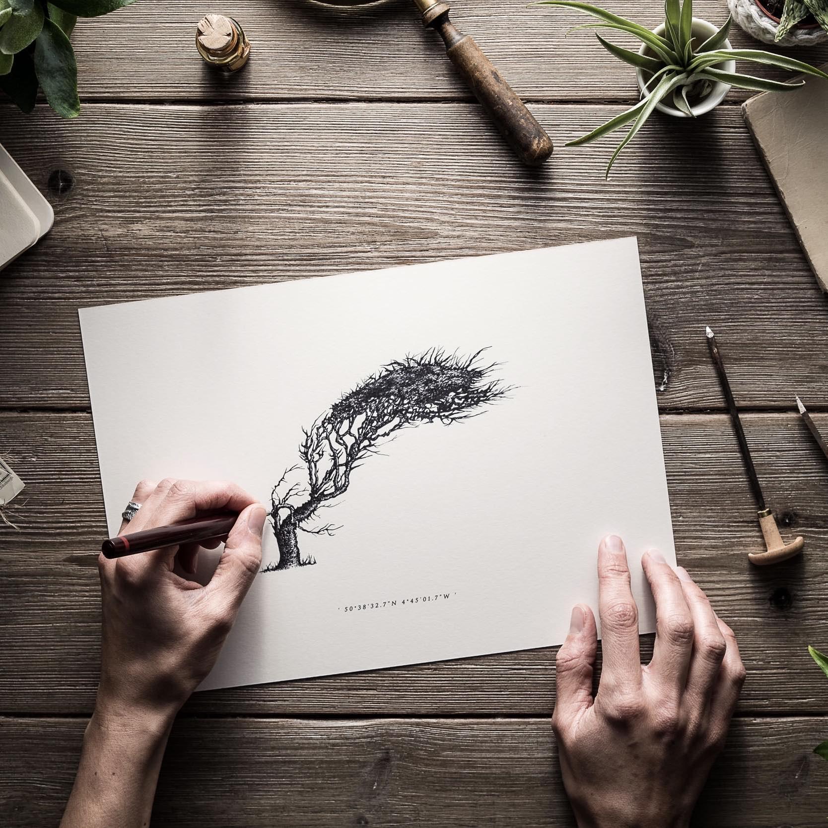 Wind Pruned Tree | Trebarwith | Being drawn