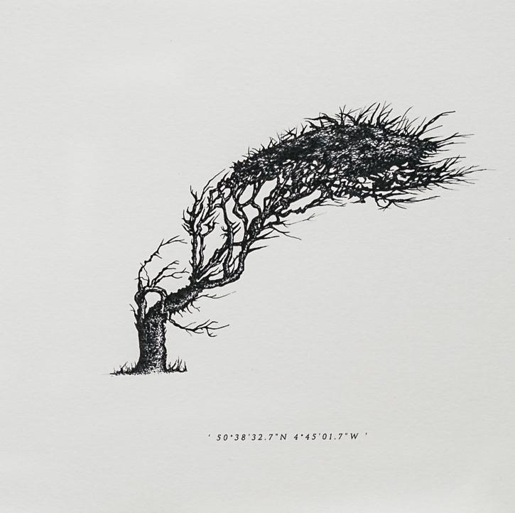 Wind Pruned Tree | Trebarwith | Close Up